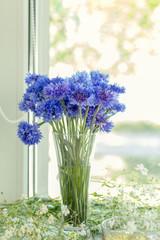 Cornflower flower in glass on windowsill