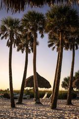 Palms trees at sunset on Siesta Key beach in Florida