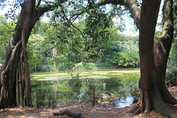 Bosque con lago y firmamento azul