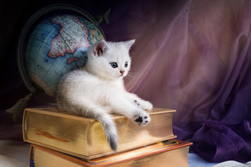 White British Shorthair kitten lies on a stack of books on the background of the globe