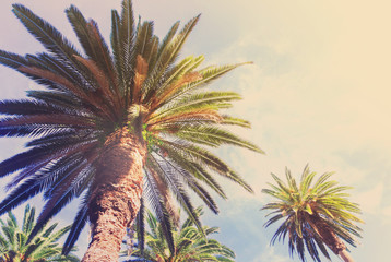 View of exotic tropical palm tree on blue sky background retro toned