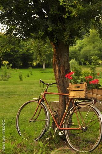 Vieux vélo en décoration de jardin \