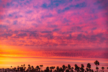 Scenic view of dramatic sky with palm trees at beach during sunset