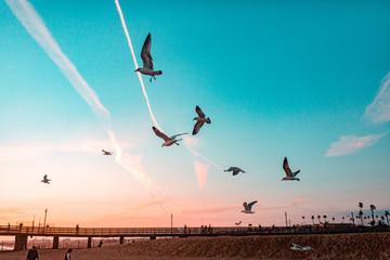 Birds on Pastel Sky