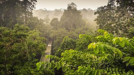 Rainforest wiew from the Canopy Walk Tower In Sepilok, Borneo