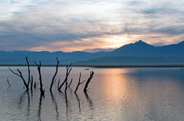 Dead tree trunks and branches poking out of drought stricken Lake Isabella at sunrise in Central California USA