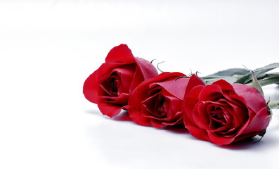 Three red roses in row with copy text space