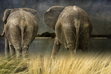 Pair of Elephants in the rain, creative composite