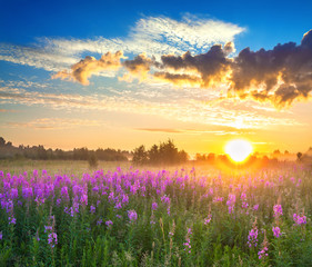 rural landscape with sunrise  and  blossoming flowers meadow
