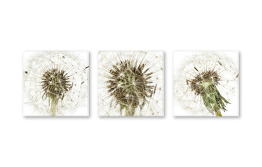 Three canvas set with  floral design pictures, interiors decor wallpaper
