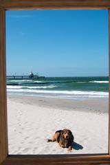 Hund im Bilderrahmen liegt am Strand