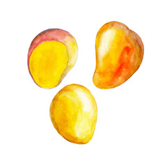 The mango isolated on white background, watercolor illustration fruit set in hand drawn style.