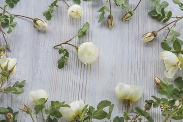 white wild rose flowers frame on light wooden background