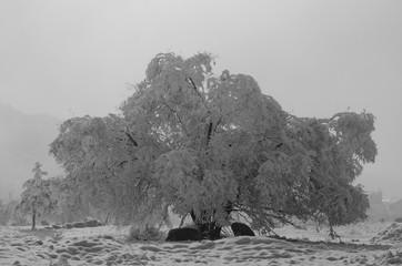DPortrait of a Tree