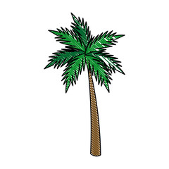 palm tropical tree beach plant image vector illustration