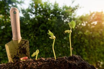 Little seedling grow up
