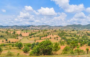 Farmland in Myanmar