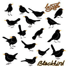 blackbird vector illustration style Flat big set