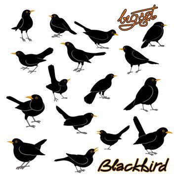 blackbird vector illustration style Flat big set