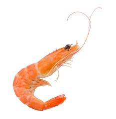 Prawns or Tiger Shrimps in White Background