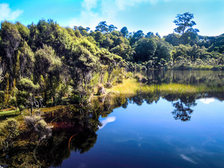 Lake Wilkie in the Catlins, Rainforest