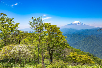 西丹沢から見る富士山
