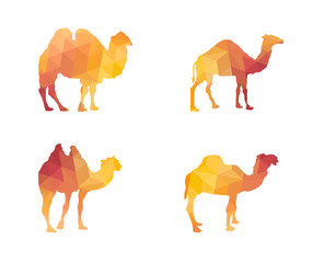 Triangle Polygonal Silhouettes of Camels