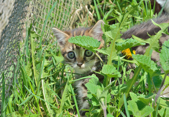 Kitten in grass 3