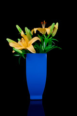 Yellow lily in a blue flower vase isolate in black background