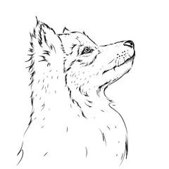Hand draw wolf portrait. Hand draw vector illustration