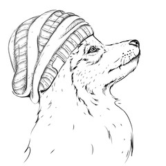 Wolf portrait. Wolf in a hat. Hand draw vector illustration