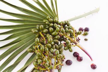 dwarf palm fruit