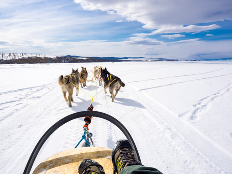Dog sledding in Frozen Lake Baikal