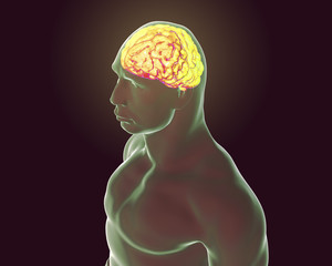 Human brain inside body isolated on black background, 3D illustration