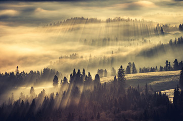 Misty mountain forest landscape in the morning, Poland