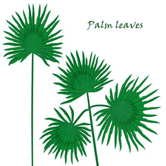Set tropical palm leaves. realistic drawing in flat color style. isolated on white background.