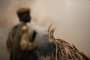 Smoke fills the sky as Kenyan rangers stand guard over the world's largest-ever ivory burn