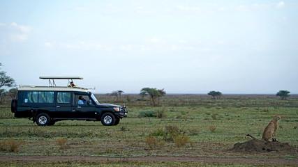 Cheetah of South Serengeti, Tanzania