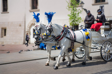 Traditional equestrian mode of transport in the tourist center of Krakow Poland