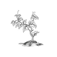 Plant with leaves engraving. Decorative grape tree. Plant bloom growth. Bonsai etching illustration isolated