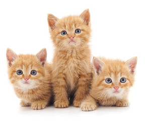 Three red cats.
