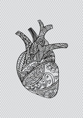 Zentangle stylized Human heart .