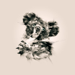 isolated drawing a portrait of the animal koala