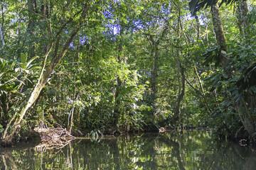 Tropical Rainforest Lagoon