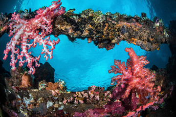 Liberty Soft Coral