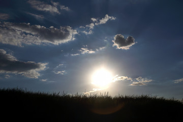 the silhouette of the grass in the sun