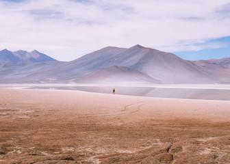 Alpaca in Bolivia