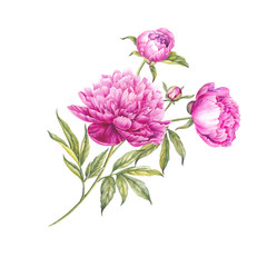 Bouquet of watercolor pink peonies.