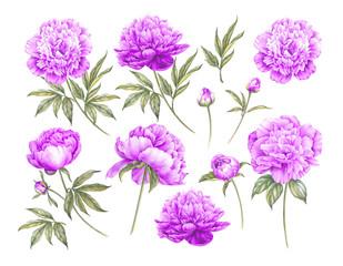 Set of botanic floral elements.