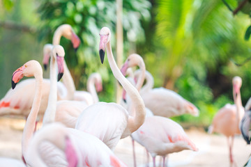Flamingo Natural Backgrounds,Evening light sunshine